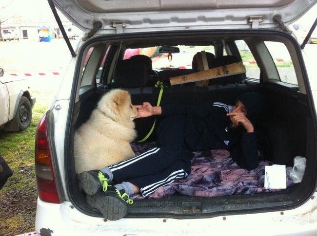 Un cucciolo in vendita a Pecs
