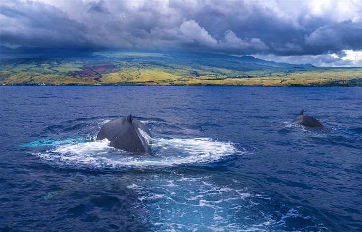 Indulge your spirit of adventure on the biggest Hawaiian island. It's still a vast frontier, full of unexpected wonders.