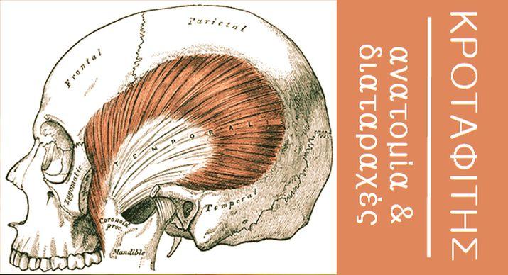 Κροταφίτης μυς - νεύρωση και ανατομία