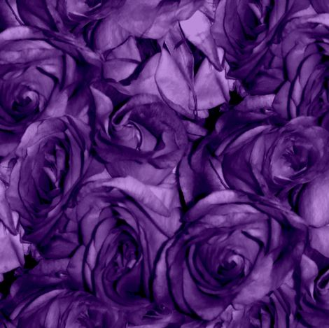 Royal Roses fabric by peacoquettedesigns on Spoonflower - custom fabric