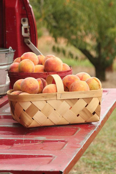 Peaches - memories of the peach orchard
