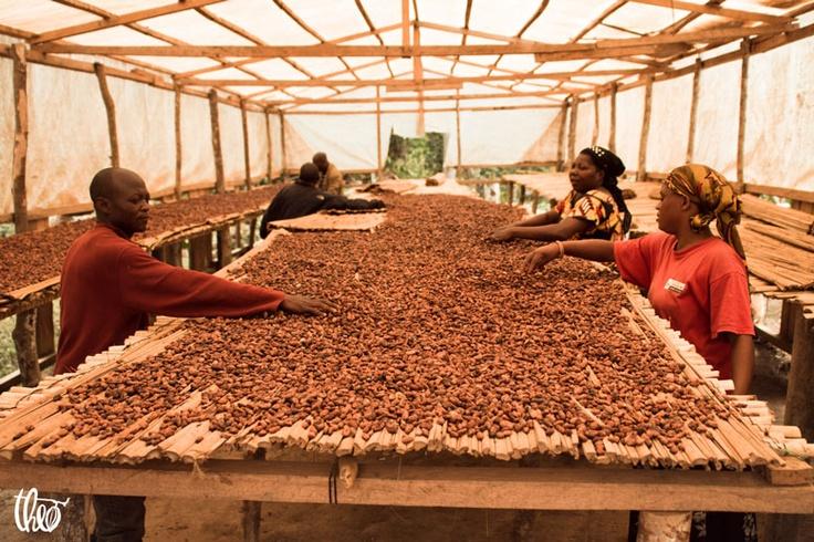 www.theochocolate.com/eci