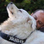 Educare il proprio cane nel miglio modo possibile? Non ci sono problemi. Ci pensa «Vivere Insieme»,