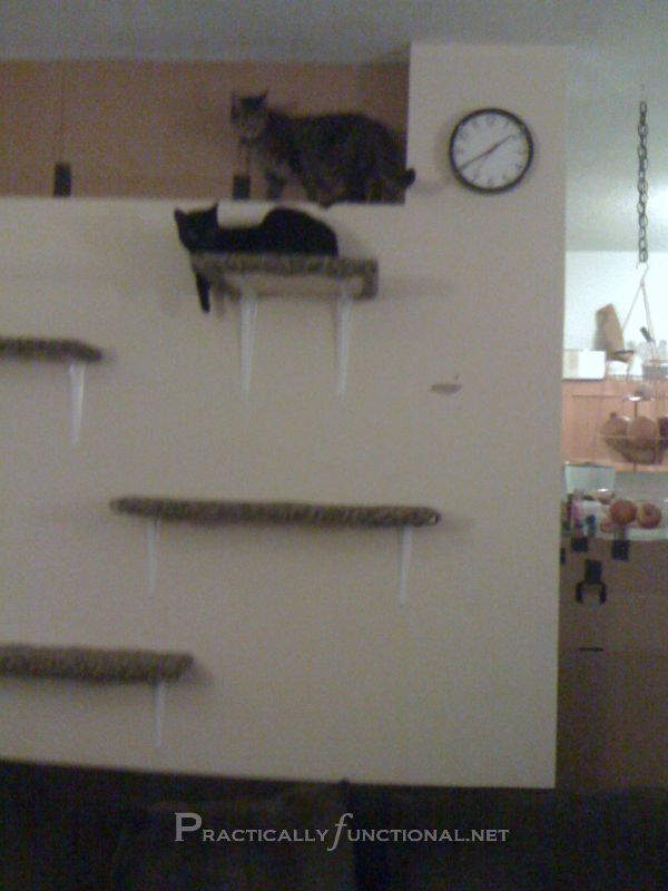 Make your own cat playground out of a wooden board, carpet scraps, L brackets, and an empty wall!