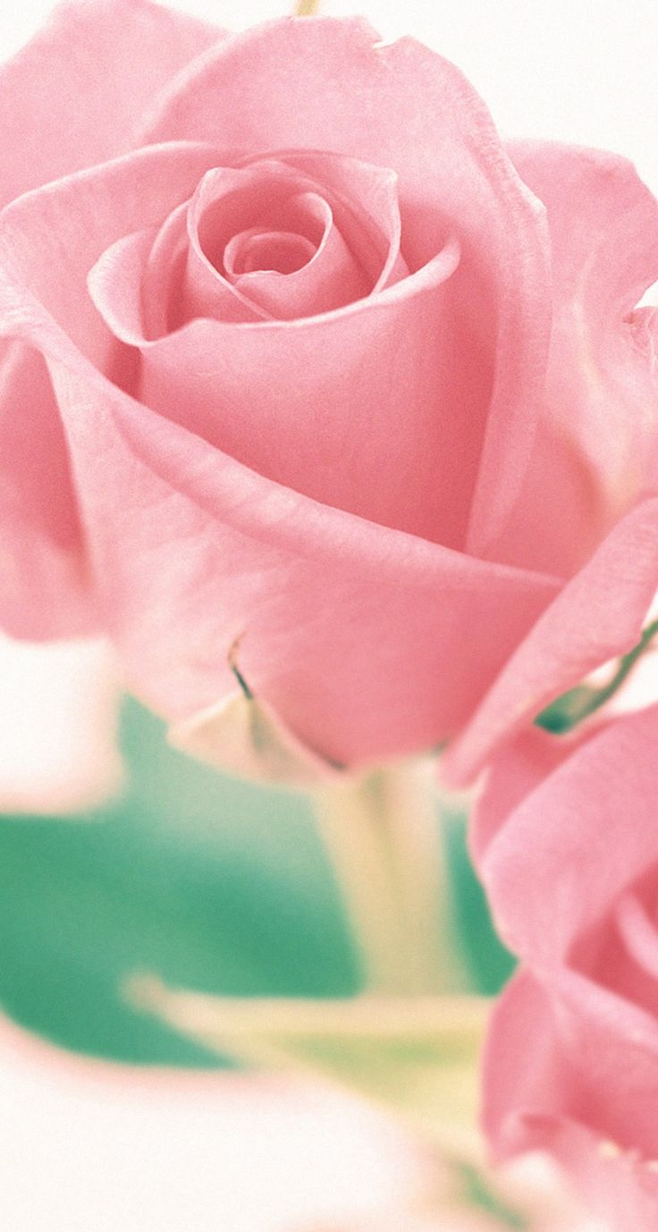 Best 25 pretty wallpapers for iphone ideas on pinterest - Valentine s day flower wallpaper ...