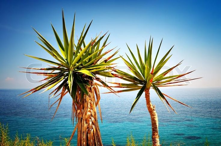 Stock image of 'Two small palm trees and Mediterranean Sea'