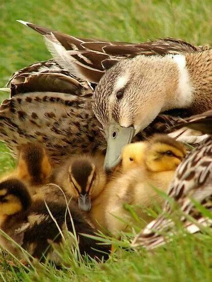 Mama loving every single one of her babies