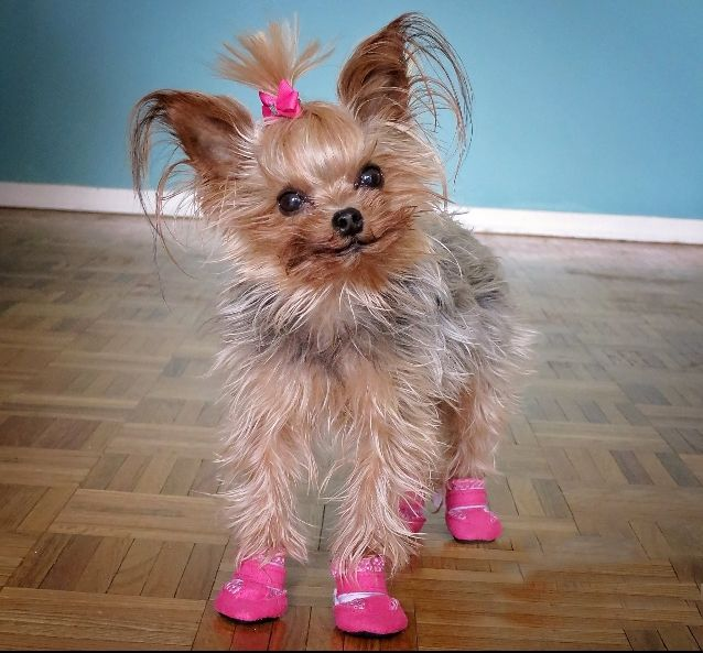 17 Best Images About Summer Dog Boots Mini Meshies By