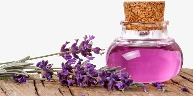 Manfaat Bunga Lavender, Bunga Cantik Pereda Stres - Obat Herbal, Obat Alami