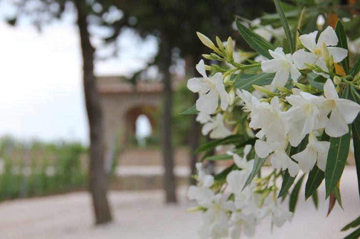 Poggio al Tufo - Pitigliano #Tuscany #Toscana #Tommasiwine