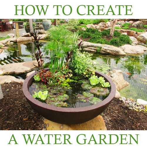 How to create a water garden in a container helpful tips for Garden pond advice