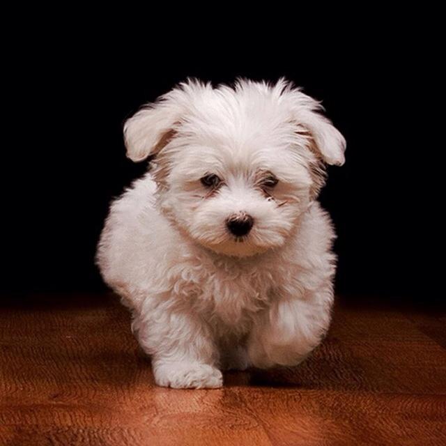 A Little Puppy!