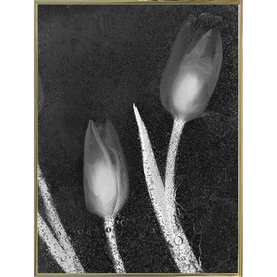 """Varick Gallery 'Tulipanes Blancos 33' Graphic Art Print Format: Gold Metal Framed Paper, Size: 26.7"""" H x 20"""" W x 2"""" D"""