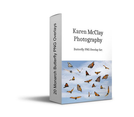 Karen McClay Photography  20 Monarch Butterfly by KarenMcClayNZ