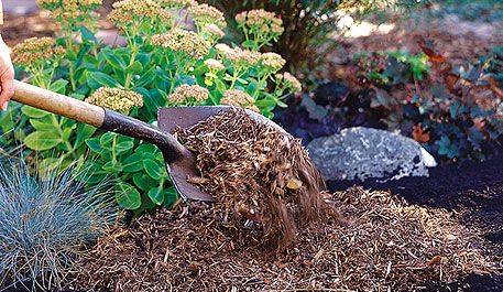 """Create a new flower bed using a no-fail technique.The mere mention of removing turf grass for new flower beds is enough to give me a backache. It's been dubbed everything from """"turf recapturing"""" to """"lawn-busting."""""""