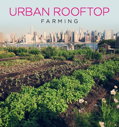 Eco-friendly Farms in the Sky - Going Green on Urban Rooftops