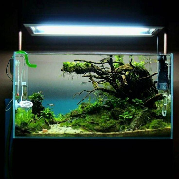 Great scape by @aquakings #aquascaping #aquarium #aquariumcreation # ...