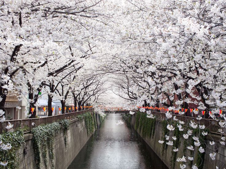 One Perfect Day in Tokyo | Qantas Travel Insider