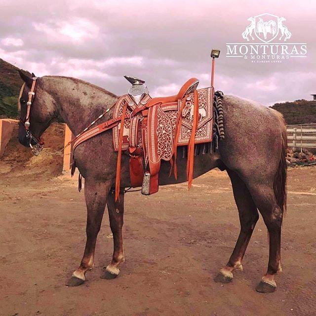 657 best monturas accesorios images on pinterest for Monturas para caballos