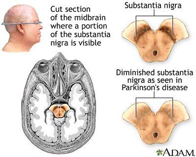 homepage.smc.edu wissmann_paul physnet anatomynet anatomy neurolink.html