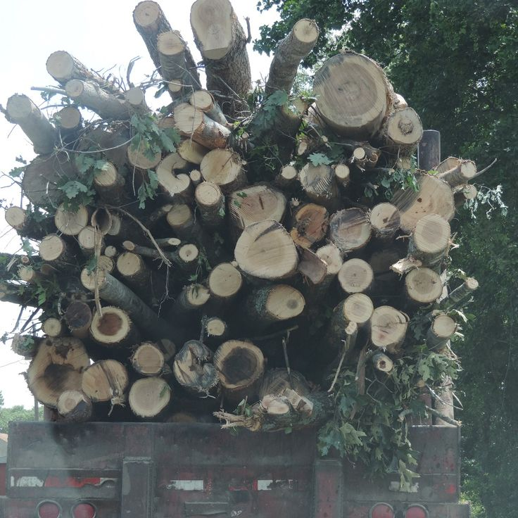 American Companies Are Shipping Millions Of Trees To Europe, And It's A Renewable Energy Nightmare