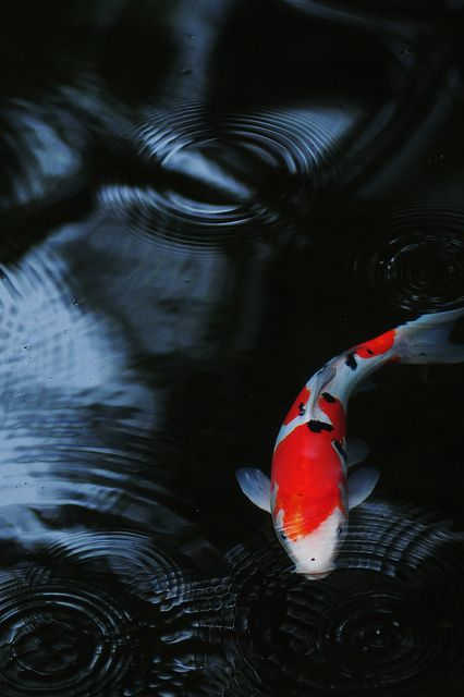 When the times comes for me to be married and have a house of my own, I want a koi pond