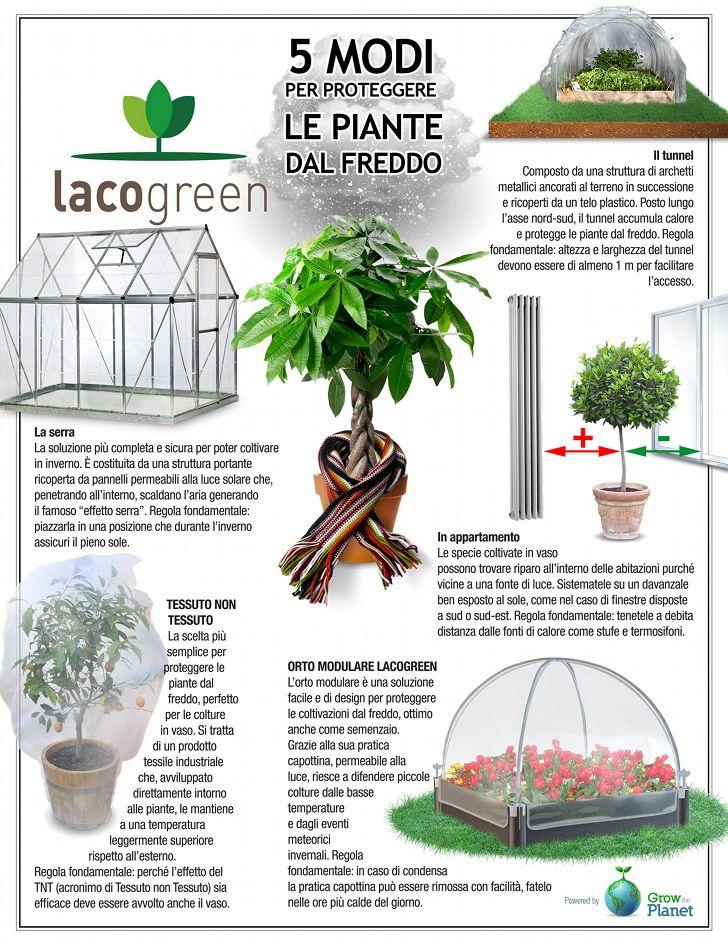 Proteggere le piante dal freddo? Sì può, con questi 5 trucchetti #giardinaggioillustrato #lacogreen #growtheplanet