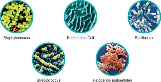 AIRLIFE te dice el ozono  ¿que patógenos  destruye? Destruye virus  el ozono oxida la cubierta lipídica de todos los virus destruyéndola. Así se modifica su estructura impidiendo la unión a su receptor. Destruye bacterias  el ozono las ataca mediante oxidación o destrucción directa de la pared de la célula con salida de componentes celulares fuera de la misma.