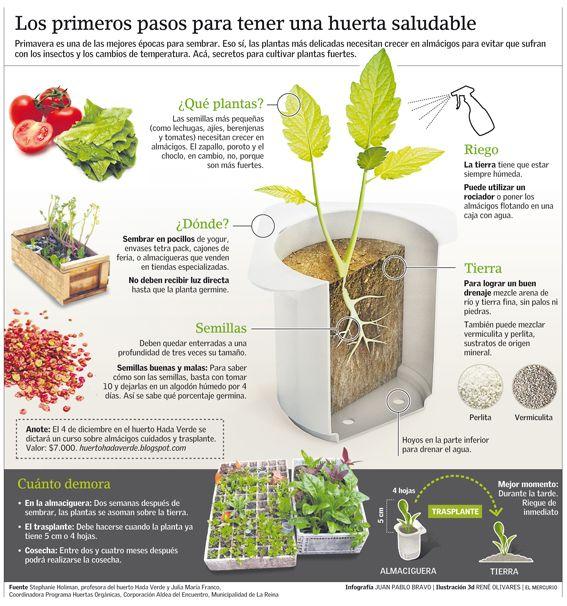 Experimenta con tu propio cultivo orgánico, aquí los primeros pasos.