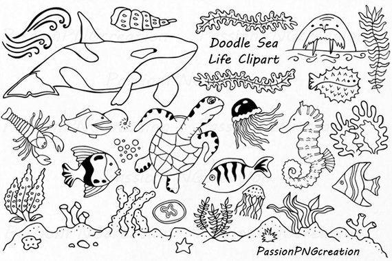 Sea underwater background. ocean bottom with seaweeds. vector marine scene.  ocean scene, sea underwater, undersea life on