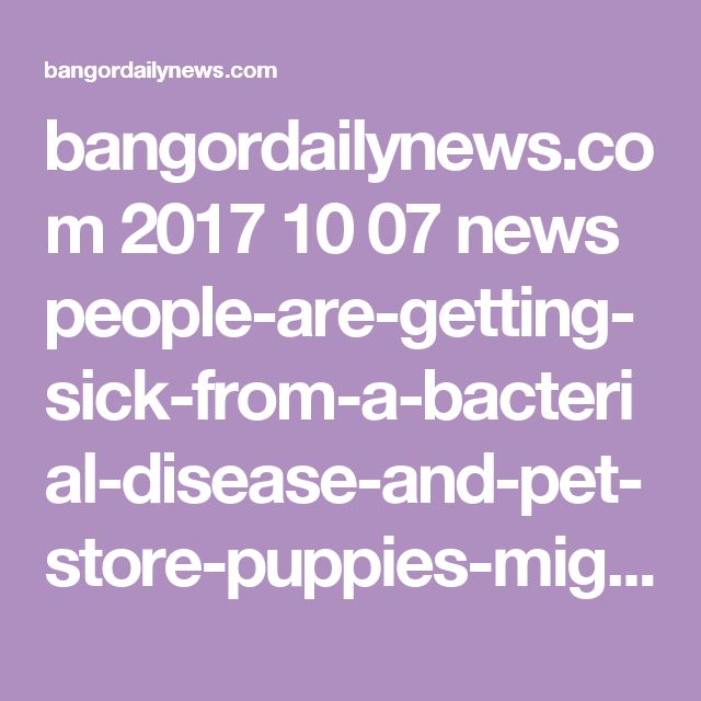 bangordailynews.com 2017 10 07 news people-are-getting-sick-from-a-bacterial-disease-and-pet-store-puppies-might-be-to-blame