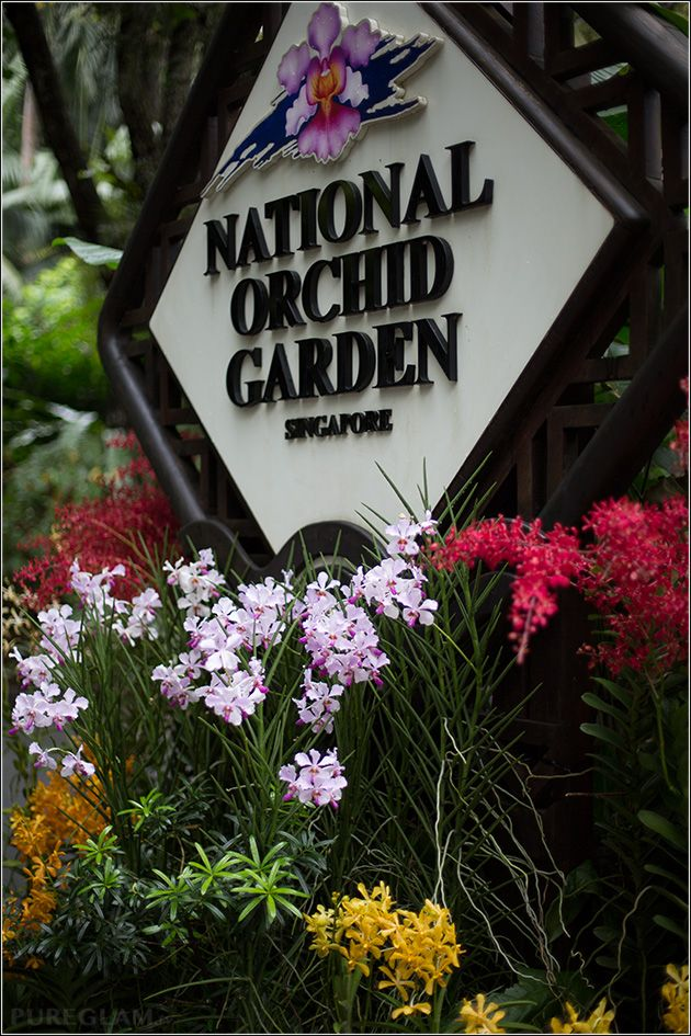 Amazing flowers and orchids at National Orchid Garden – visiting beautiful Singapore Botanical Garden – Singapore, Asia