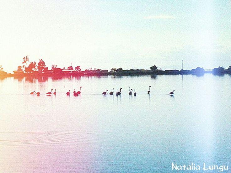 Ότι φτερουγίζει δεν σκλαβώνεται.. #flamingo #lake #mesologgi Photo:Natalia Lungu