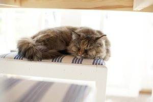 Cats Sleep What Percentage of Their Day!