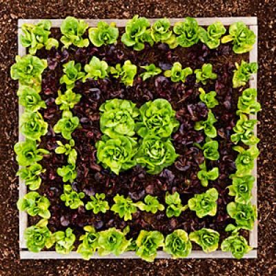 Garden Patterns Ideas 129 best edible gardening images on pinterest | edible garden