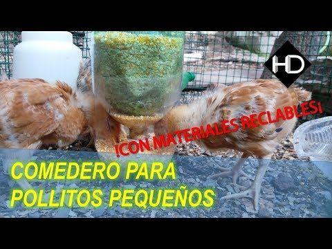 Como Hacer Un Comedero Automático Para Pollitos Pequeños Facilisimo Youtube Bebedero De Pollo Comederos De Pollo Comedero Automático