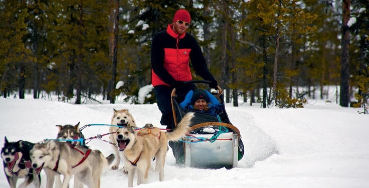 huskytrack: Hundeschlitten Reisen: huskytrack, der Spezialreiseveranstalter für Hundeschlitten-Touren und Hundeschlitten-Reisen in Lappland, Schweden, Finnland und Norwegen bietet Schnuppertouren mit Aufenthalt auf einer Huskyfarm, Tagestouren, bis hin zu Hundeschlittentouren von Hütte zu Hütte mit Expeditionscharakter. Weitere Informationen: http://www.pr4you.de/pressemeldungen.htm  http://www.huskytrack.de | http://www.pr4you.de | http://www.pr-agentur-tourismus.de