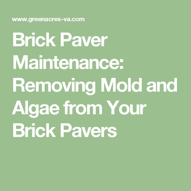 Brick Paver Maintenance: Removing Mold and Algae from Your Brick Pavers
