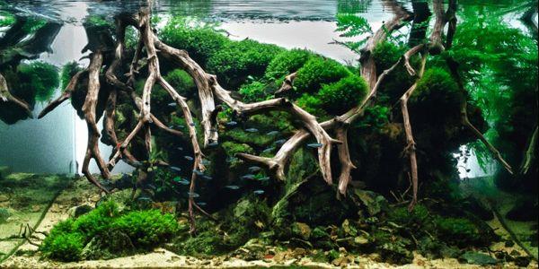 The International Aquatic Plants Layout Contest 2012