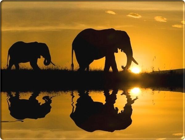 African Wildlife pictures  animals