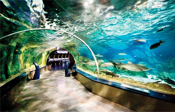 This is a tour for family fun. You will First you will visit the Istanbul Akvaryum which is the biggest thematic aquarium of the world. Then you will be able to visit Aqua Florya Shopping Mall. Travel with Tourboks!