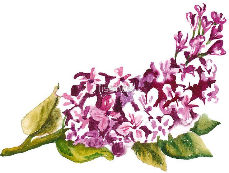 flower _Lilac