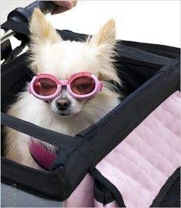 les 25 meilleures id es concernant panier velo pour chien. Black Bedroom Furniture Sets. Home Design Ideas