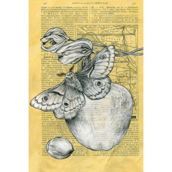 Batterfly and tulips - Postcards, Pages of an old encyclopedia