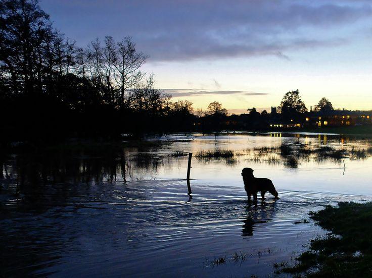 flooded dog walk