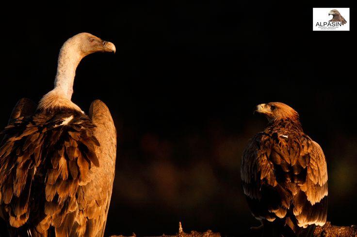miradas de la biodiveridad de #SierraMorena. #naturephotography