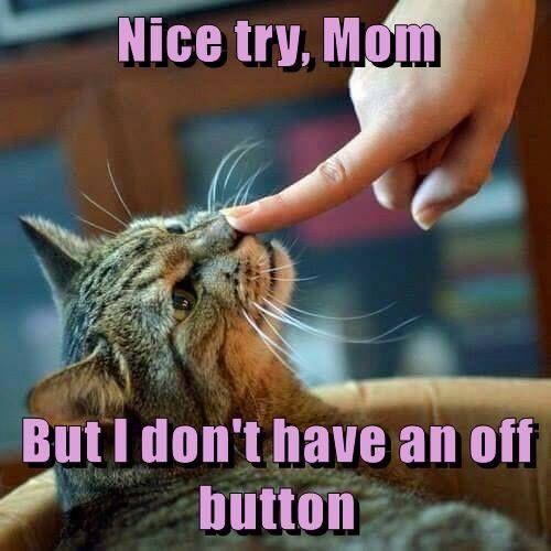 Best Amusing Images On Pinterest Best Quotes Ever Bill O - Adorably optimistic possum sparks hilarious photoshop battle