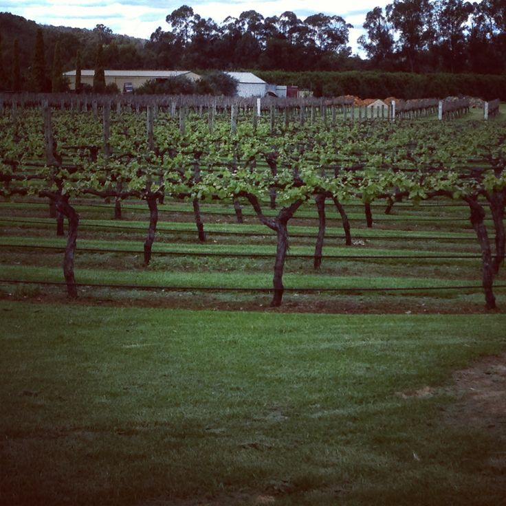 Harvey, Western Australia (Kotai Winery).