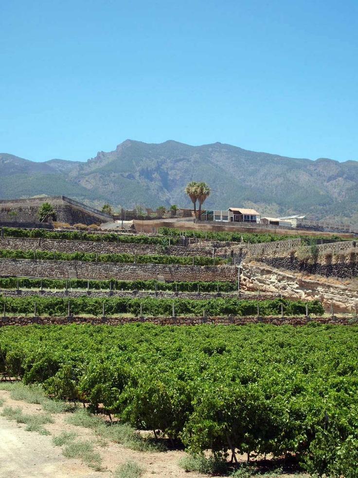 Viñedo #Contiempo en La Hoya #Enoturismo #Viticultura