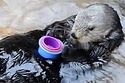 Nellie The Otter Loves Stacking Cups OMG, so stinkin cute you have to follow to the source to see the video